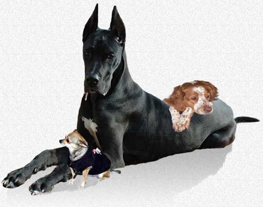 Serviciile complete ale clinicilor veterinare sunt sprijinul oricarui detinator de animal de companie