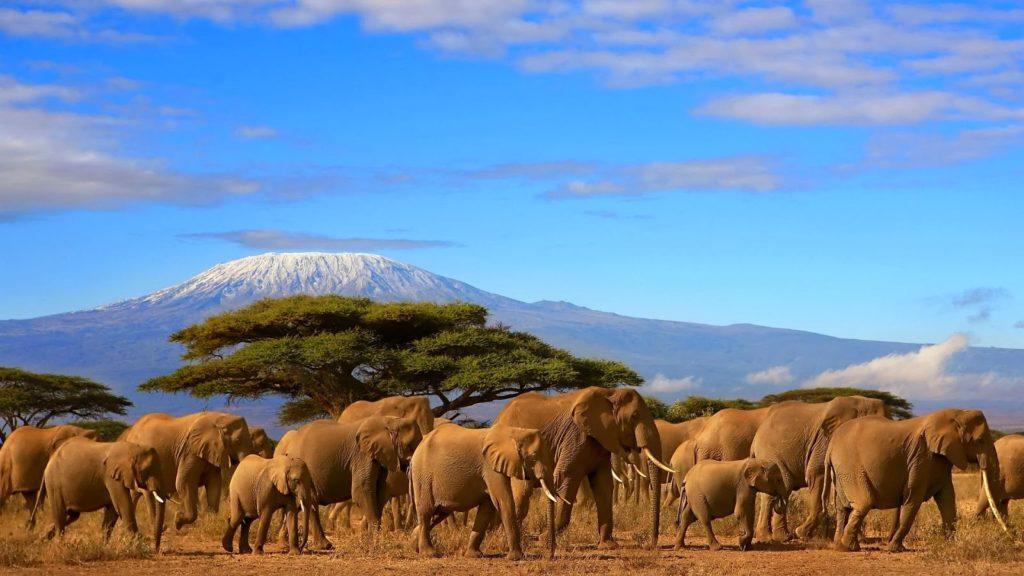 Circuite in Africa – o experienta de neuitat